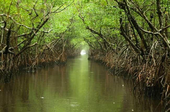 Only A Fifth Of The Everglades... is listed (or ranked) 4 on the list Thanks To Invasive Species, The Florida Everglades Are Getting A Whole Lot Scarier