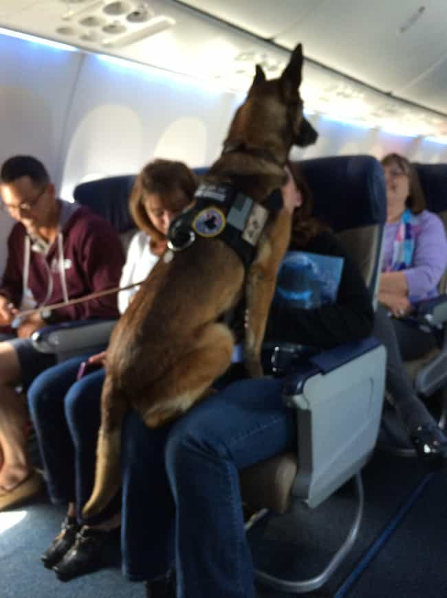 Meet Corporal Kiddy, A 12-Year... is listed (or ranked) 4 on the list In-Flight Pictures Of The Best Passengers You Would Totally Share An Aisle With