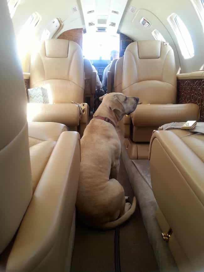 Private Jet Pooch is listed (or ranked) 4 on the list In-Flight Pictures Of The Best Passengers You Would Totally Share An Aisle With