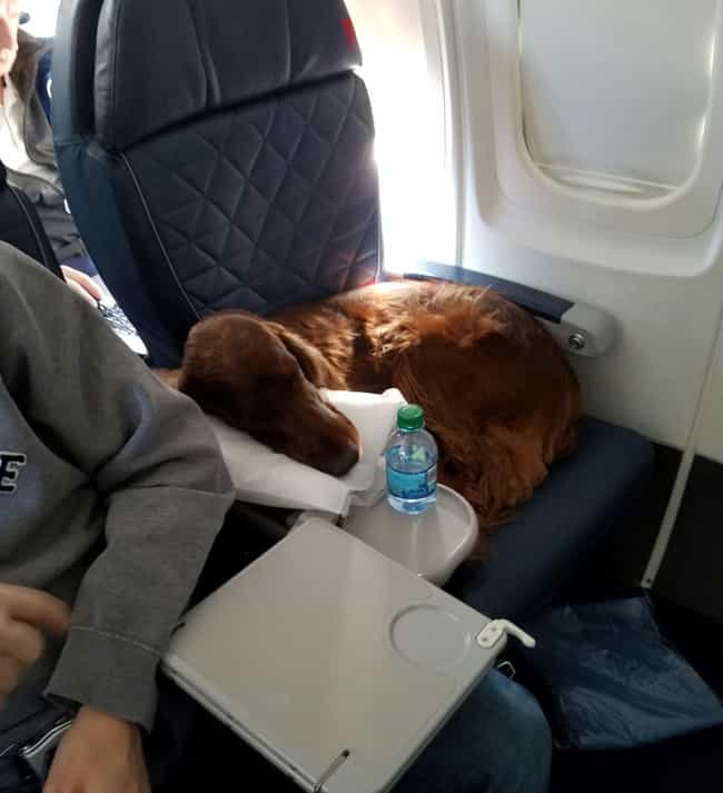 Best In Flight is listed (or ranked) 4 on the list In-Flight Pictures Of The Best Passengers You Would Totally Share An Aisle With