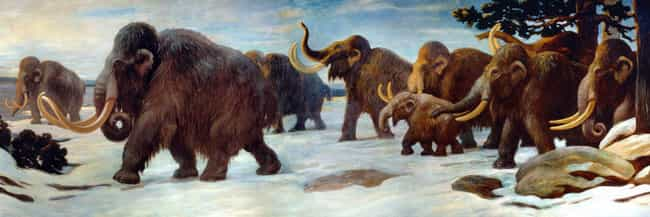 Females Generally Moved Around... is listed (or ranked) 3 on the list Male Woolly Mammoths Were Idiots - Which Is Probably Why They Went Extinct