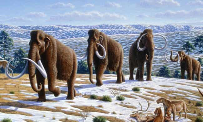 That Doesn't Mean That Mammoth... is listed (or ranked) 4 on the list Male Woolly Mammoths Were Idiots - Which Is Probably Why They Went Extinct