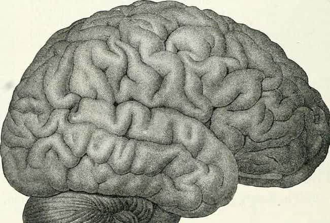 يذهب الدماغ إلى وضع التنظيف