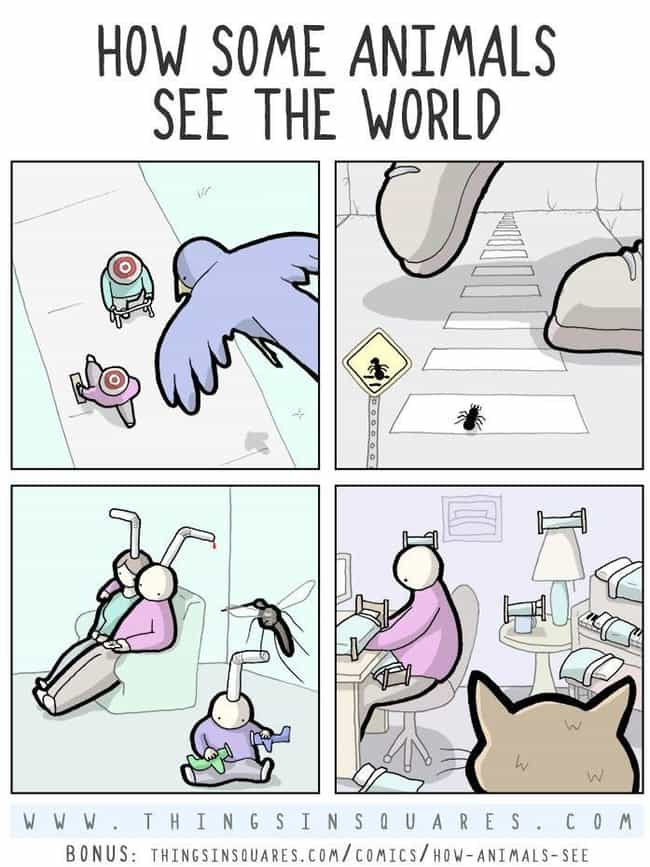 Animals Don't See What We See is listed (or ranked) 1 on the list This Artist's Surreally Humorous Comics Portray Things We Can All Relate To