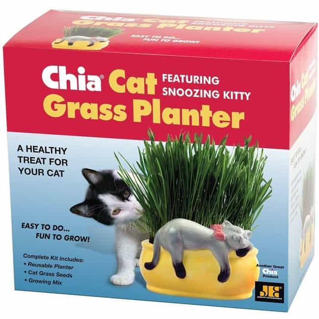 Snoozing Chia Cat is listed (or ranked) 4 on the list Chia Pets Still Exist And You Won't Believe How Many Crazy New Ones There Are