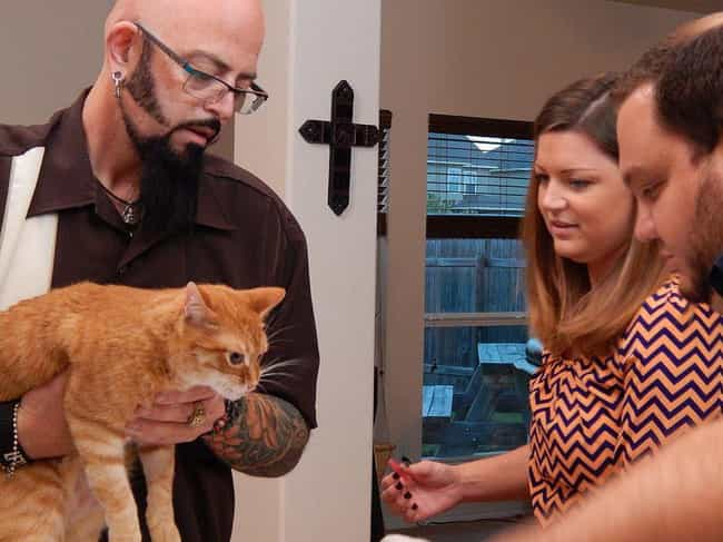 Galaxy Tries To Work Wit... is listed (or ranked) 3 on the list Jackson Galaxy Is Way Better Than Cesar Millan And It's So Obvious