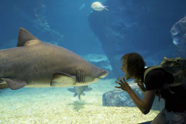 Sharks Do Not Have A Bloodlust... is listed (or ranked) 6 on the list Discovery Channel's 'Shark Week' Is A Shady Money Maker Feeding You Lies