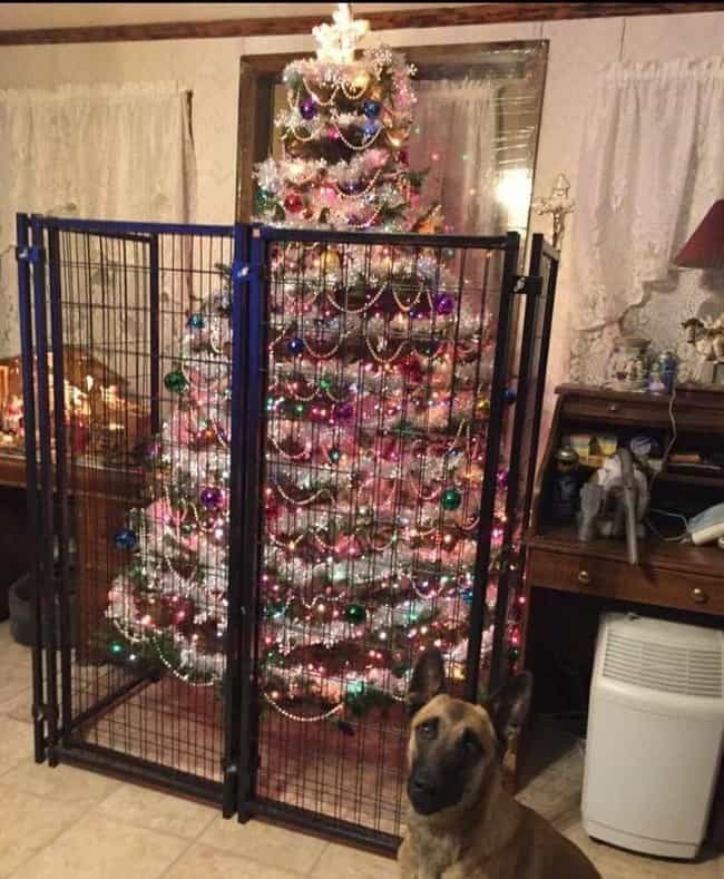 Image result for pictures of dog knocking over a christmas tree
