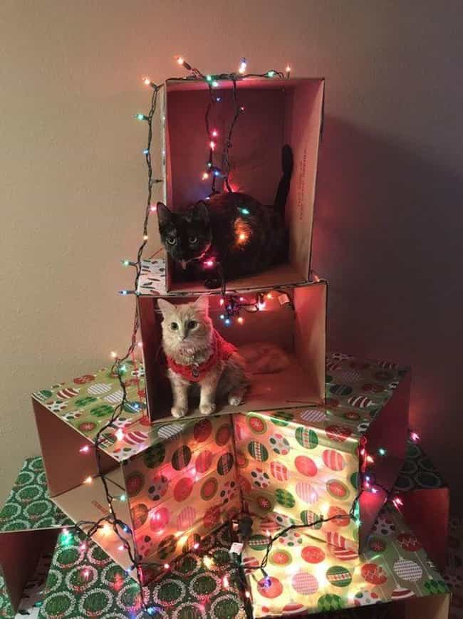 If You Can't Beat 'Em, J... is listed (or ranked) 1 on the list These People Figured Out Genius Hacks To Protect Their Christmas Trees From Pets
