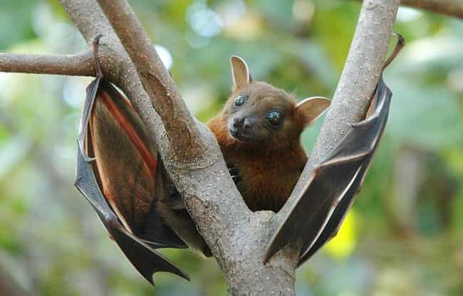 Bats Are Blind And Rely Solely... is listed (or ranked) 8 on the list Myths You Always Believed That Are Actually 100% False