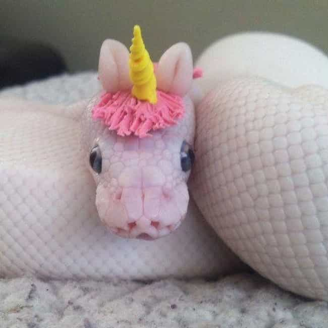 Mini Dragon Or Magical Unicorn... is listed (or ranked) 1 on the list 25 Adorable Snake Pics That Will Convince You They're Harmless Happy Noodles