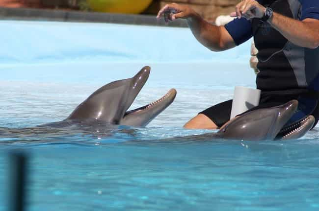 Flipper Died By Refusing... is listed (or ranked) 3 on the list Flipper The Dolphin Died More Upsettingly Than We Ever Knew, According To Her Trainer