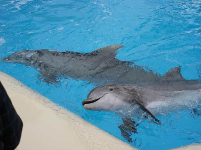 A Total Of Five Differen... is listed (or ranked) 2 on the list Flipper The Dolphin Died More Upsettingly Than We Ever Knew, According To Her Trainer