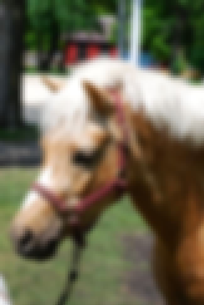 "A 7-Year-Old Welsh Pony Had It... is listed (or ranked) 2 on the list A String Of Horrifying ""Horse-Ripping"" Mutilation May Be Proof Of Satanic Cult Activity"