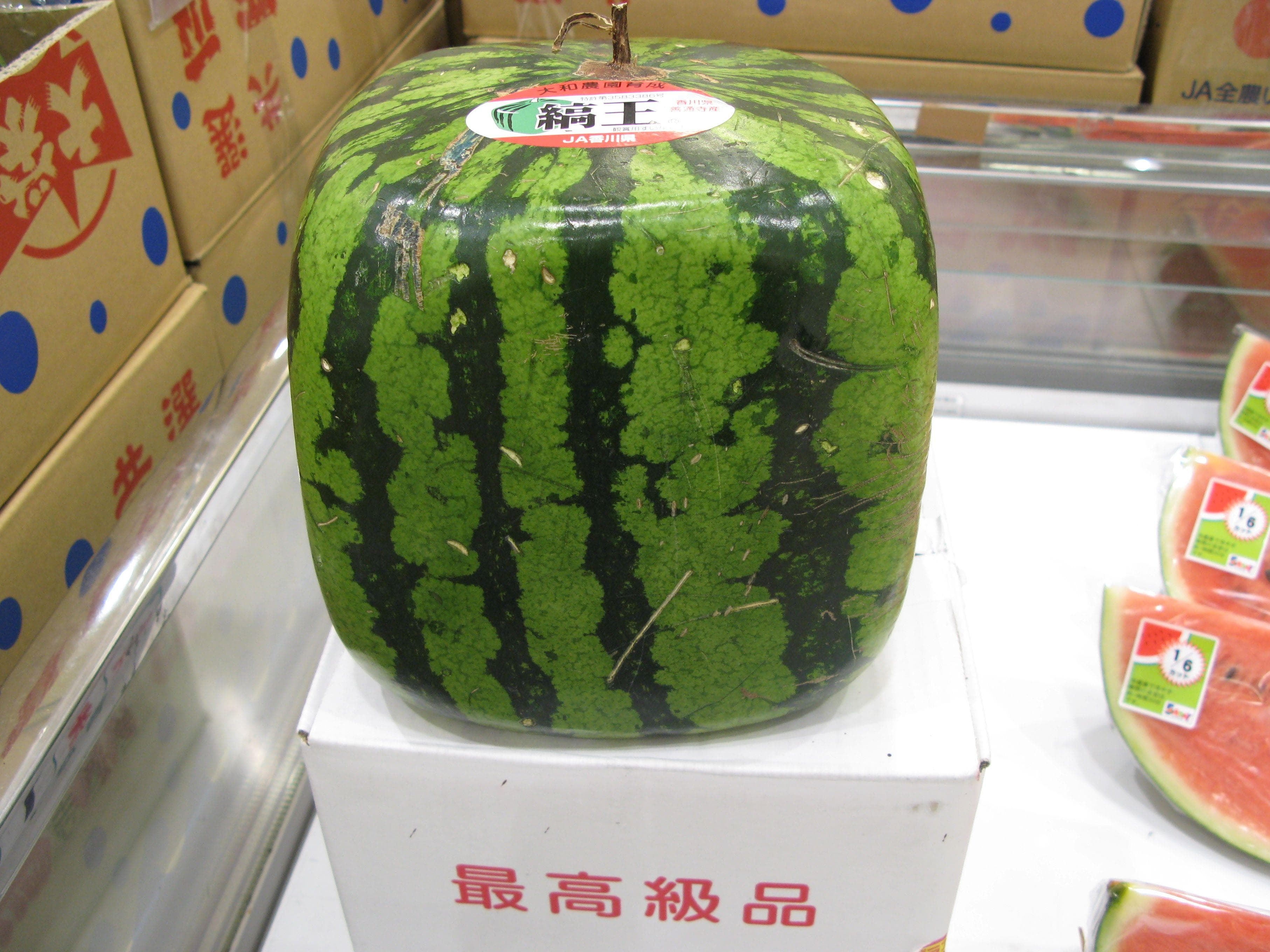 Image of Random Japan's Luxury Fruit Obsession, Where Melons Sell For Thousands
