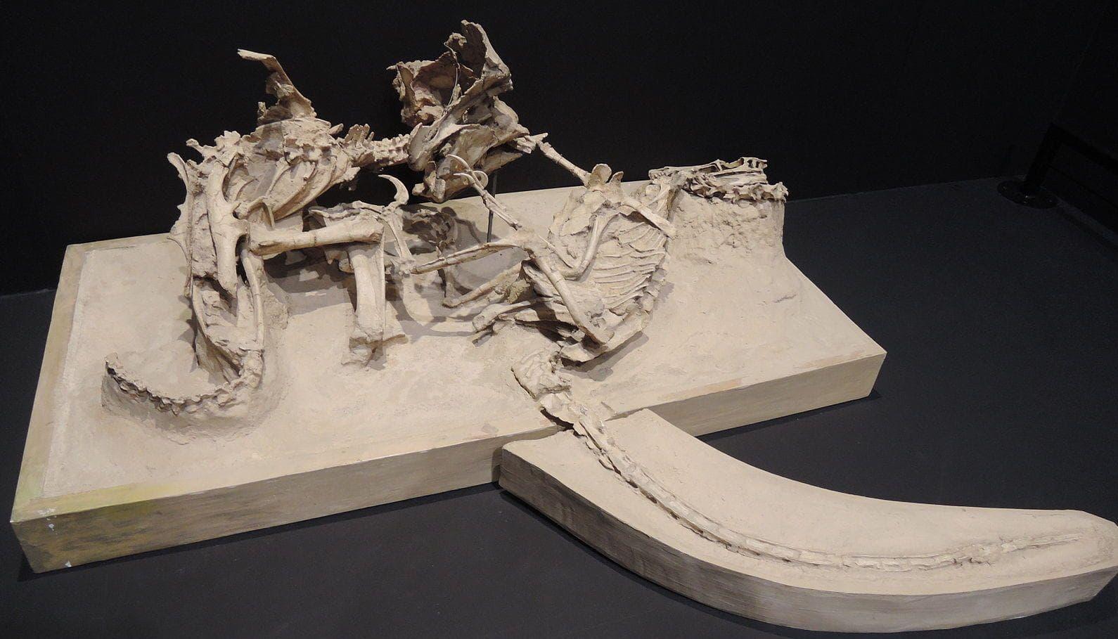 Random Most Bizarre Fossils Ever Discovered