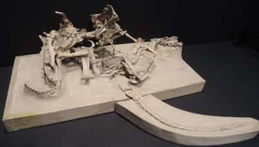 A Velociraptor And Its Prey Were Fossilized Mid-Combat