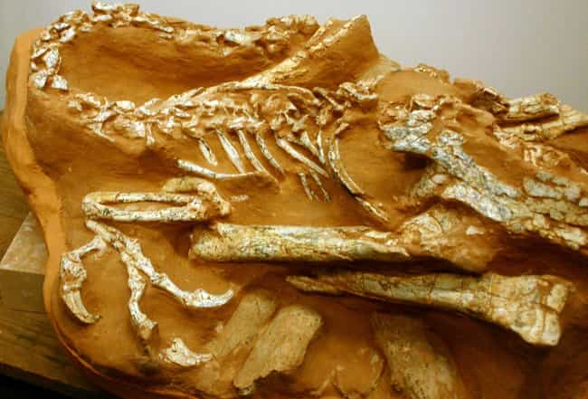 One Dinosaur Was Preserved Whi... is listed (or ranked) 3 on the list The Most Bizarre Fossils Ever Discovered