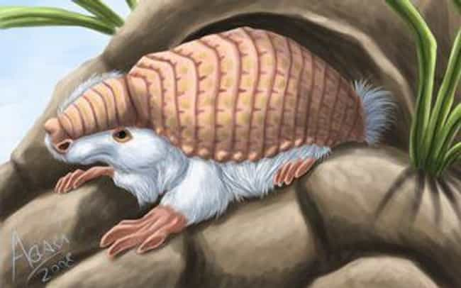 You Definitely Cannot Have One... is listed (or ranked) 1 on the list The Pink Fairy Armadillo Is Equal Parts Adorable And Kinda Scary