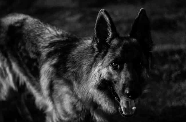 It Specifically Targeted Dogs is listed (or ranked) 3 on the list Here Is Everything You've Ever Wanted To Know About The Vampire Beast Of North Carolina