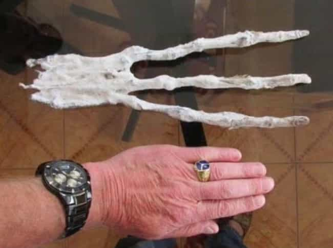 The Hand Has 8-Inch Long Finge... is listed (or ranked) 2 on the list Scientists Believe This Mummified Hand Found In A Peruvian Cave Is Evidence Of Aliens On Earth