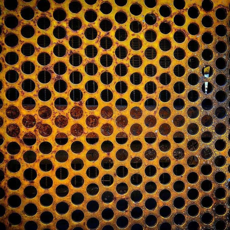 Trypophobia Is The Weirdest Fear You Might Actually Have