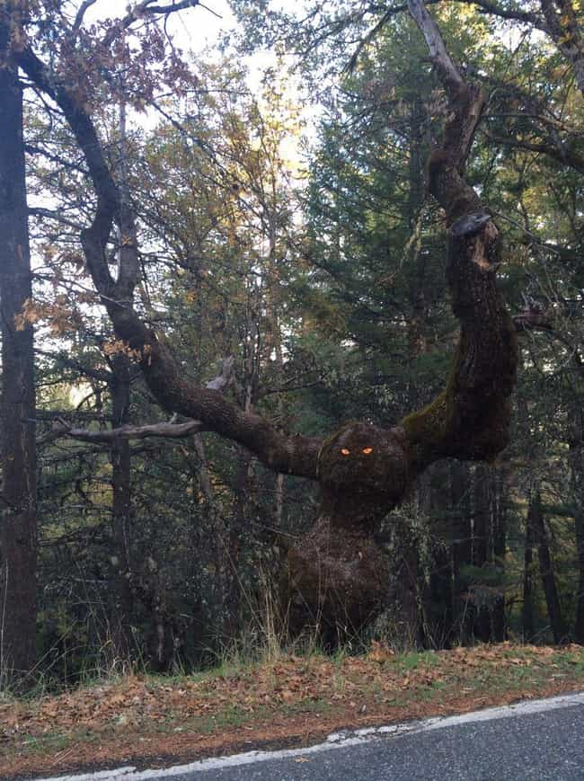 Eye Spy is listed (or ranked) 2 on the list Creepy And Sinister Trees That Look Like They Grew Out Of The Pits Of Hell