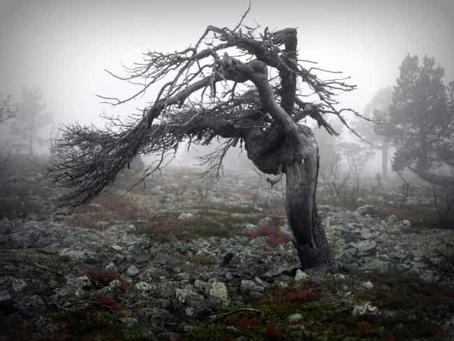 In Agony is listed (or ranked) 4 on the list Creepy And Sinister Trees That Look Like They Grew Out Of The Pits Of Hell