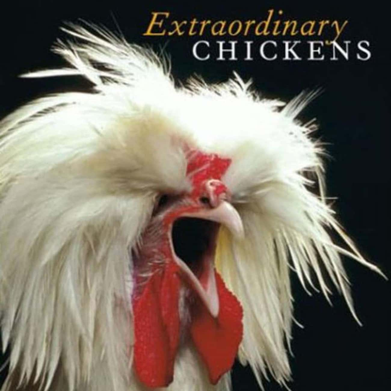 Extraordinary Chickens is listed (or ranked) 2 on the list The Funniest Coffee Table Books Money Can Buy