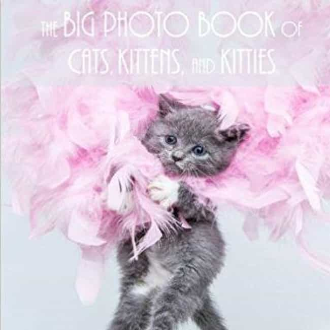 The Big Photo Book of Ca... is listed (or ranked) 3 on the list The Best Coffee Table Books for Cat Lovers