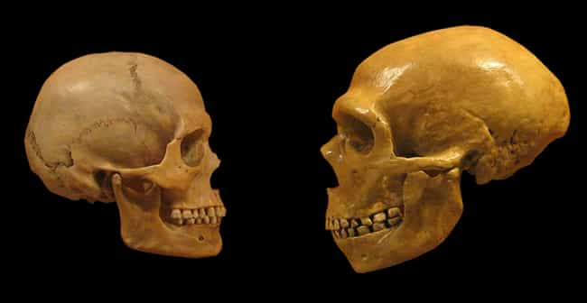 Humans Definitely Slept ... is listed (or ranked) 1 on the list Everything We've Been Able To Figure Out About The Sex Lives Of Neanderthals