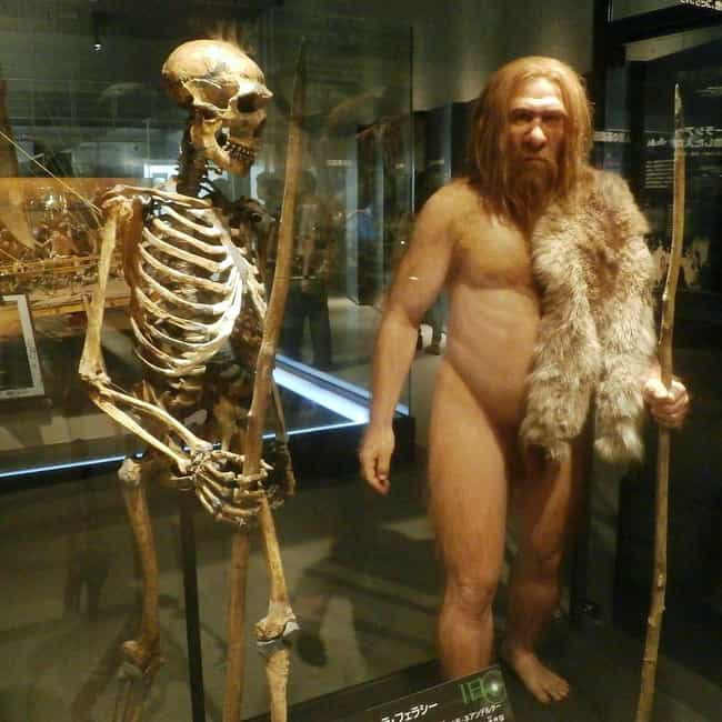 Neanderthals Transmitted... is listed (or ranked) 2 on the list Everything We've Been Able To Figure Out About The Sex Lives Of Neanderthals