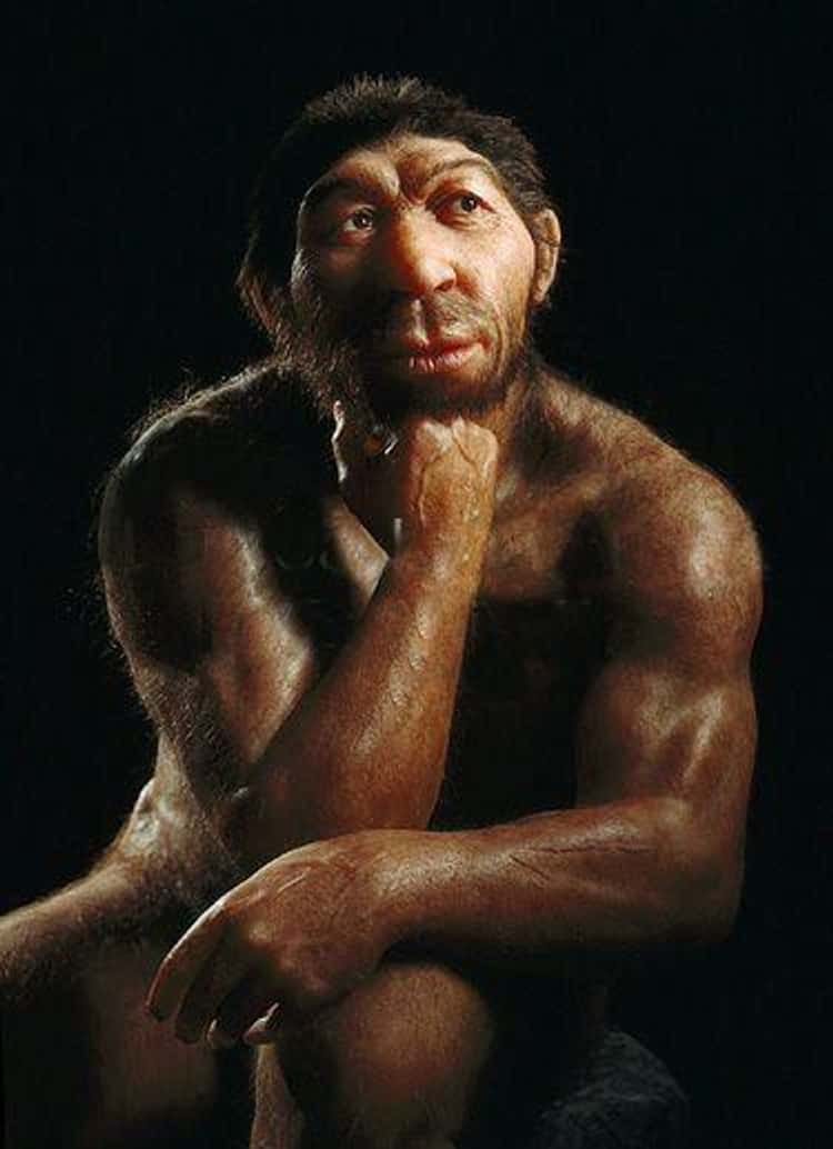 Neanderthal Genitals Were The Same Size As Our Own