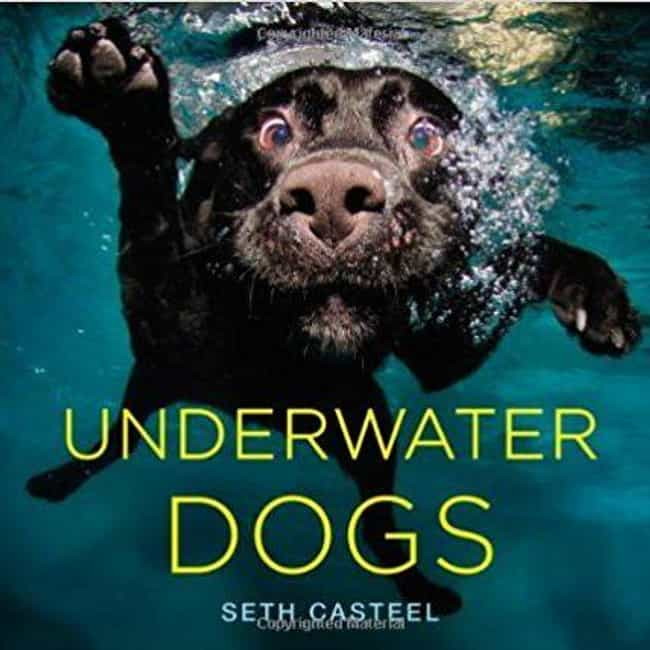 Underwater Dogs is listed (or ranked) 2 on the list The Best Cheap and Inexpensive Coffee Table Books