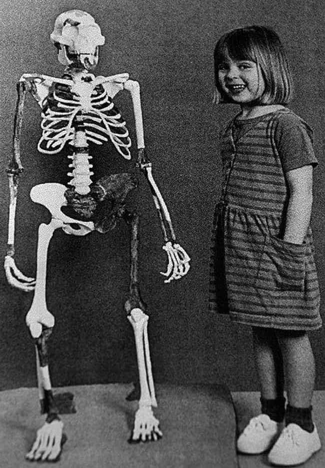 We Know Her Gender Due T... is listed (or ranked) 5 on the list The Story Of Lucy - A Humanoid Skeleton That Is Approximately 3.2 Million Years Old