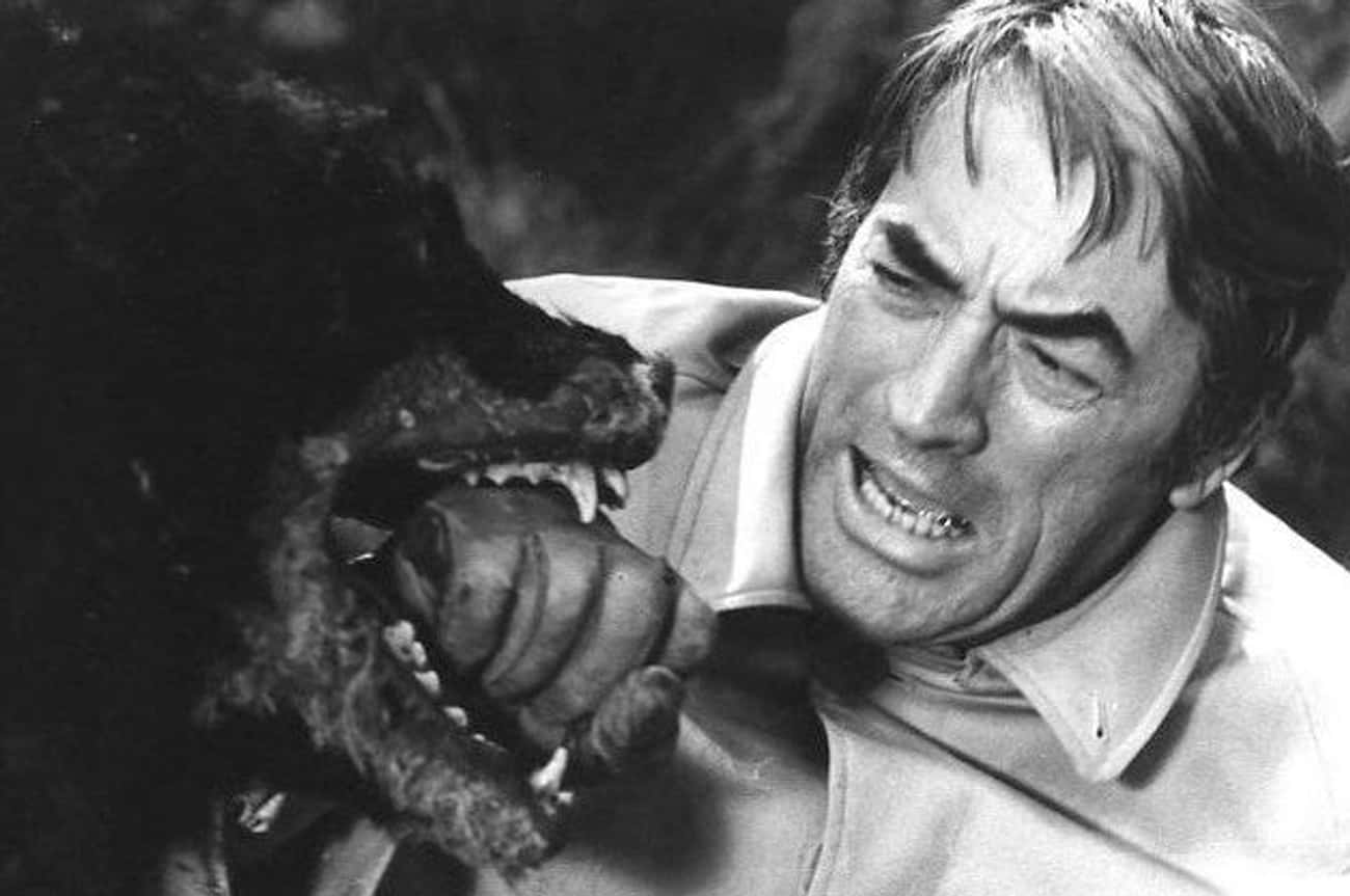 A Group Of Trained Rottweilers is listed (or ranked) 4 on the list The Omen Is One Of The Most Cursed Film Productions Ever - And Some Believe Satan Is Behind It