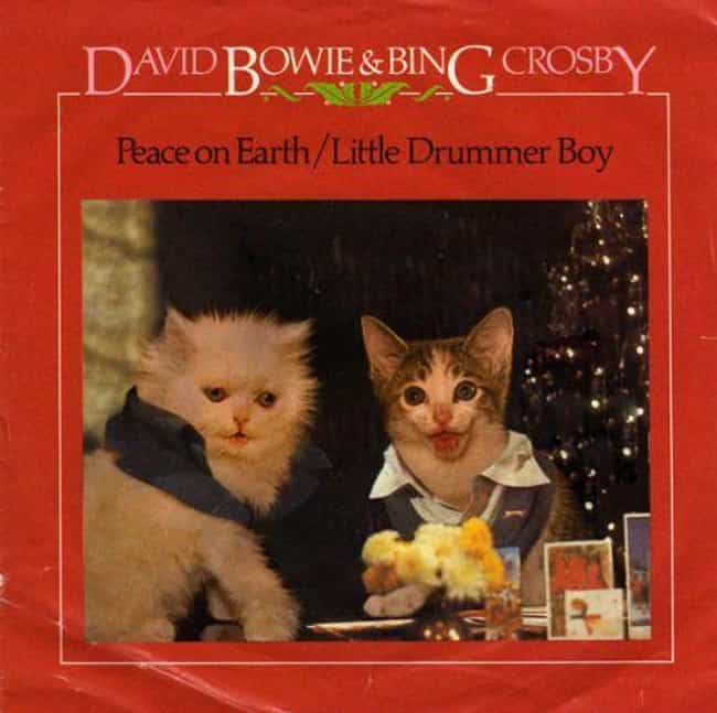 David Meowie And Bing Catsby is listed (or ranked) 2 on the list Genius Recreates Album Covers Featuring Cats