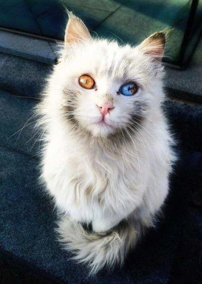 About One In A Hundred A... is listed (or ranked) 4 on the list Everything You've Ever Wanted To Know About Heterochromia