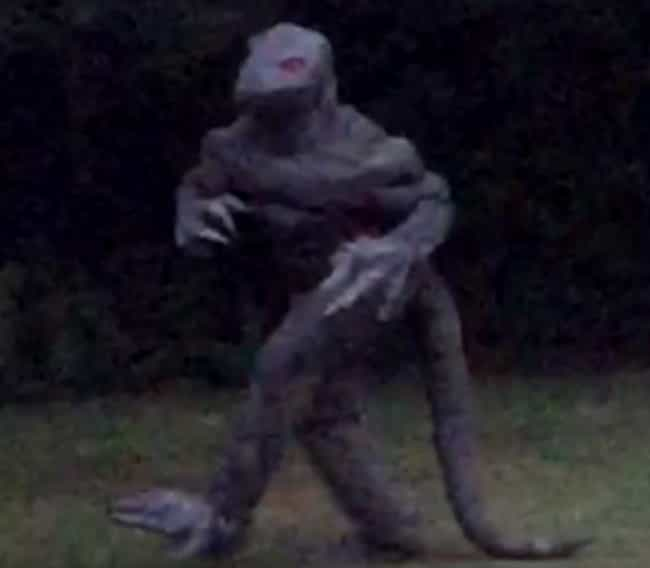 A Woman Snapped A Picture Of T... is listed (or ranked) 4 on the list The Lizard Man Is Elusive, But His Claw Marks Suggest He's Haunting Scape Ore Swamp