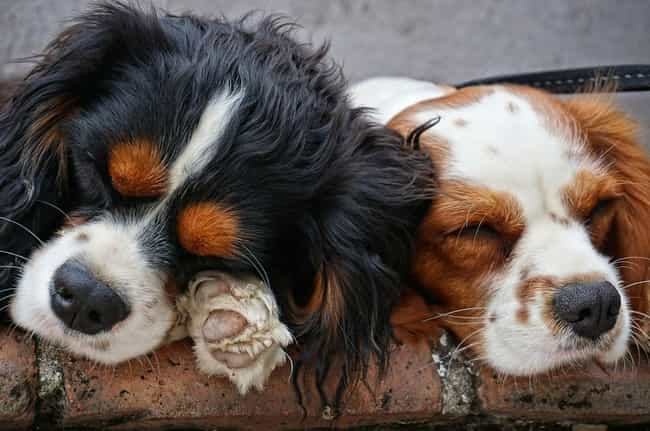 Dogs Basically Have Two Noses is listed (or ranked) 1 on the list What Dogs Find Out When They Sniff Each Other's Butts