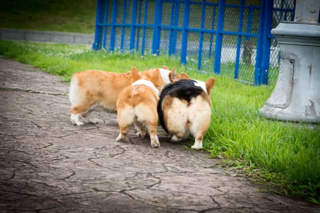 The Secret Is In What Dogs Sec... is listed (or ranked) 3 on the list What Dogs Find Out When They Sniff Each Other's Butts