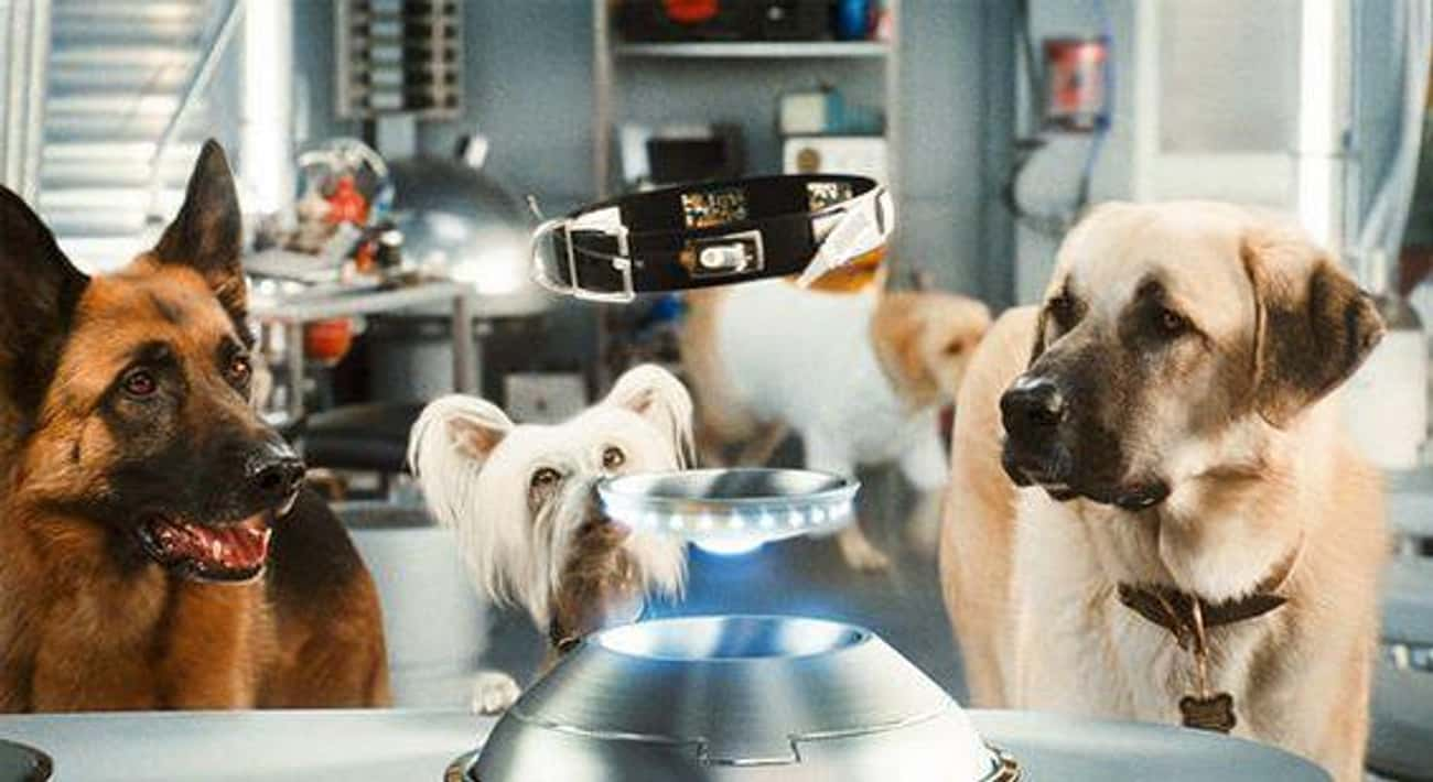 Dogs Are Colorblind is listed (or ranked) 4 on the list Facts About Animals That You Have Completely Wrong Thanks To Movies And TV