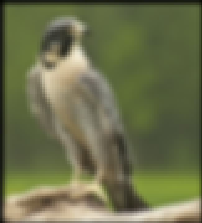 Falcon (March 21-April 19) — D... is listed (or ranked) 1 on the list What Is Your Native American Zodiac Sign, And What Does It Say About You?