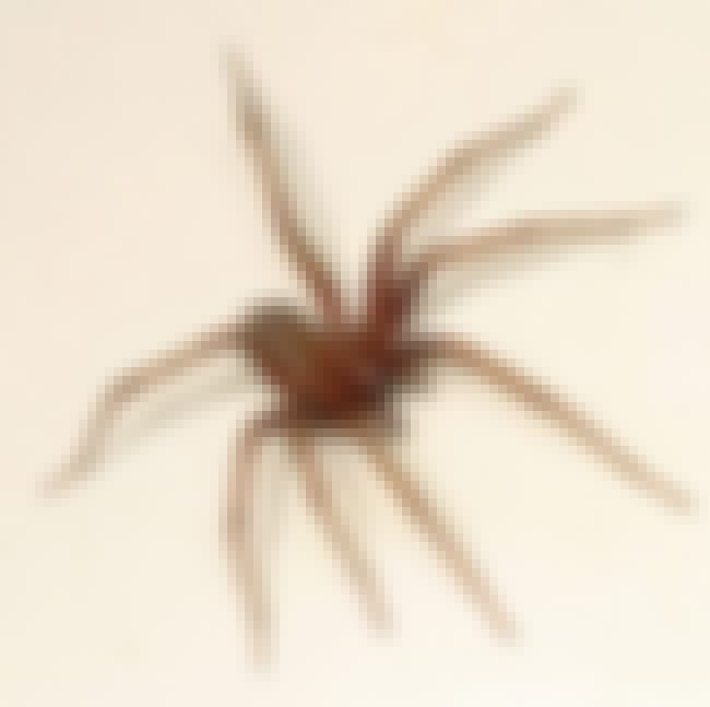 Barn Funnel Weaver Spider is listed (or ranked) 2 on the list The Most Common Animals You Share Your Home With