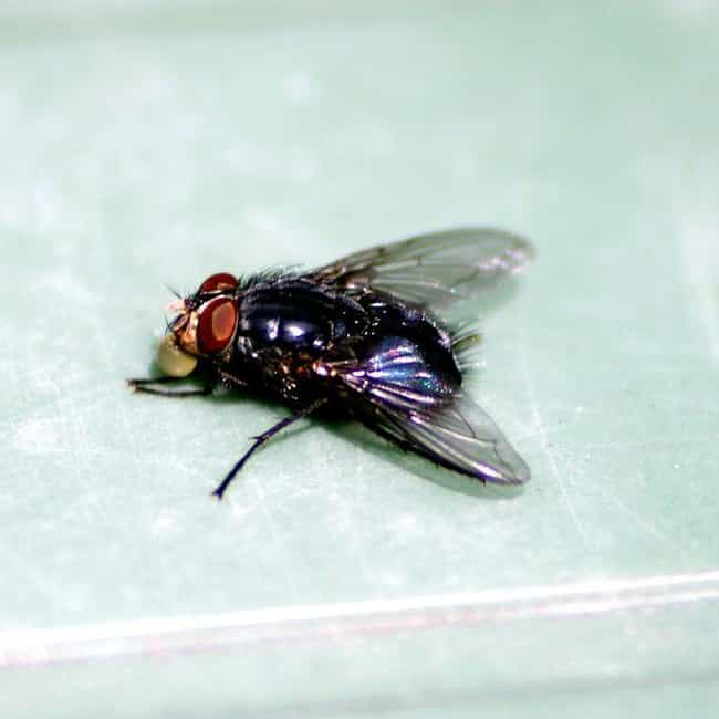 House Fly is listed (or ranked) 4 on the list The Most Common Animals You Share Your Home With