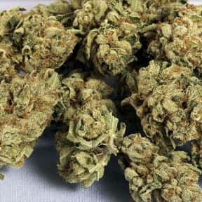 OG Kush is listed (or ranked) 5 on the list The Best Types of Weed for Insomnia