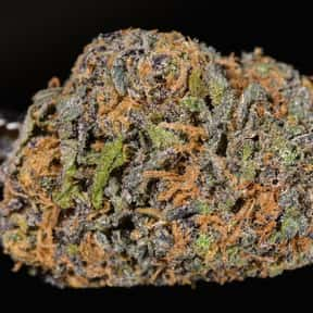 Granddaddy Purple is listed (or ranked) 1 on the list The Best Types of Weed for Insomnia