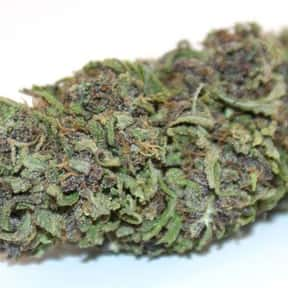 Blueberry is listed (or ranked) 7 on the list The Best Types of Weed for Insomnia