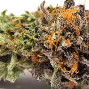 LA Confidential is listed (or ranked) 24 on the list The Best Types of Weed for Insomnia