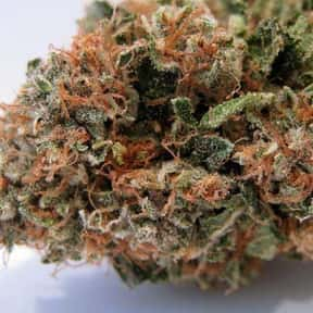 Tahoe OG Kush is listed (or ranked) 6 on the list The Best Types of Weed for Insomnia